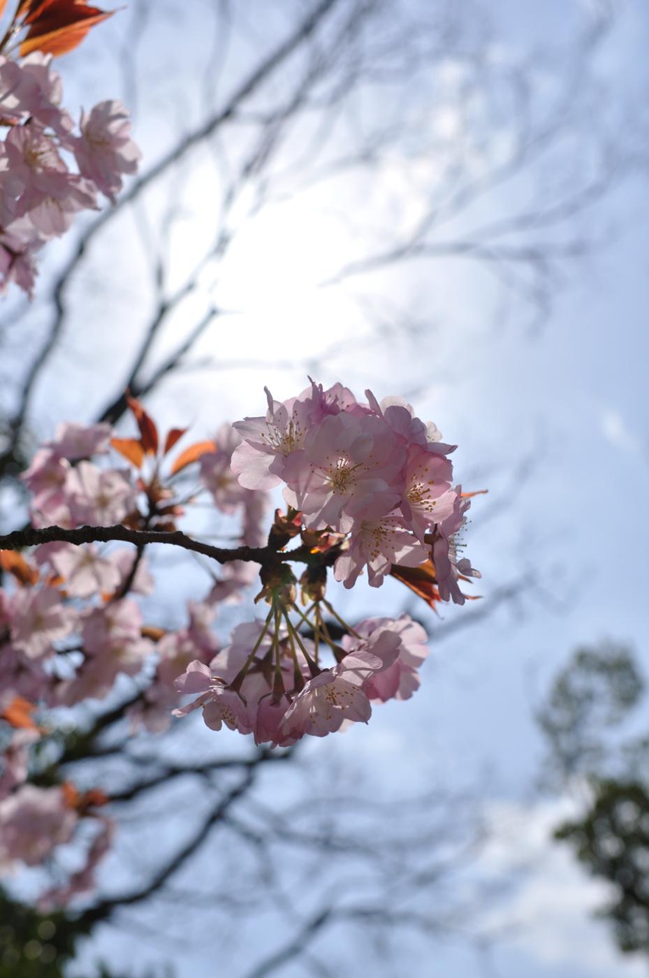 逆光桜ちゃんその2