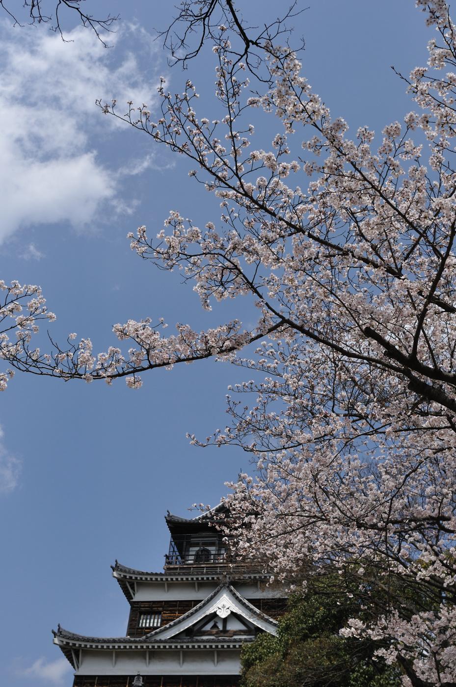 天守閣と桜たん