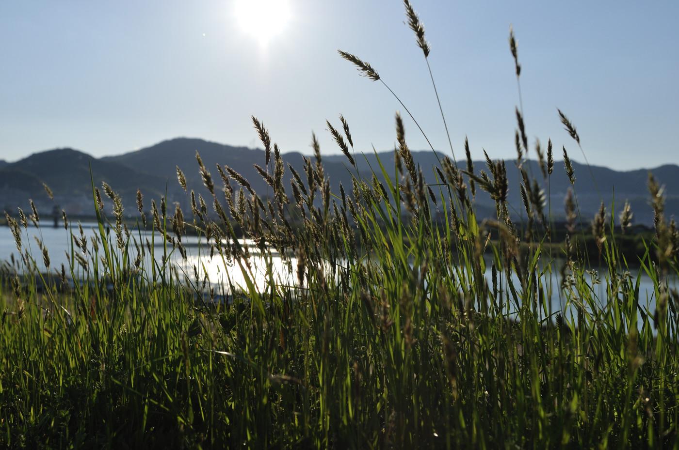 逆光で土手の草