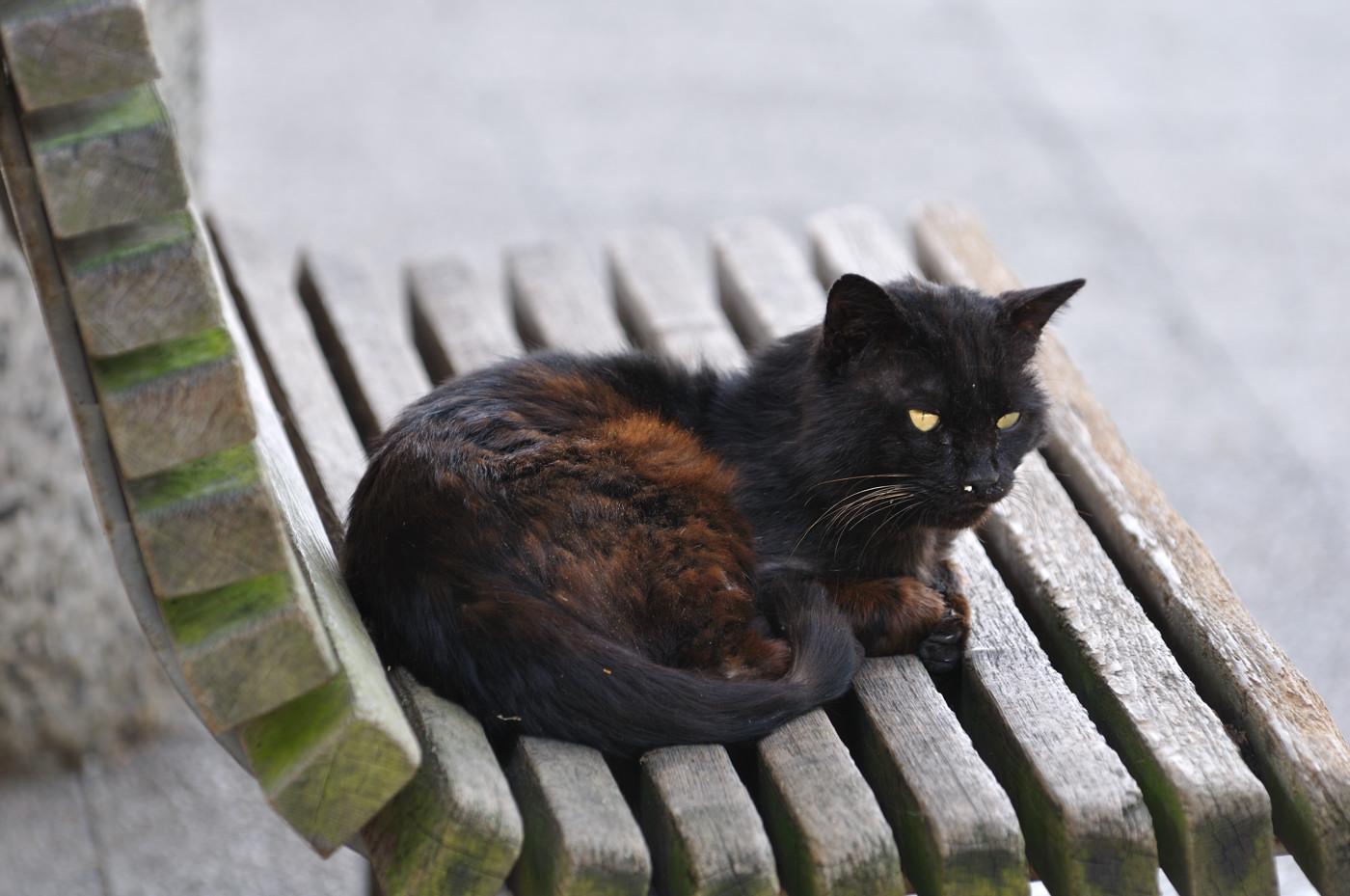 つおそうな黒猫