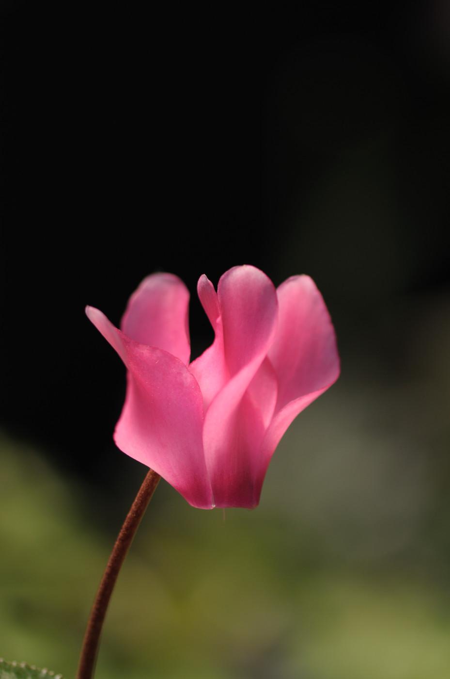 我が家の妙な花その2