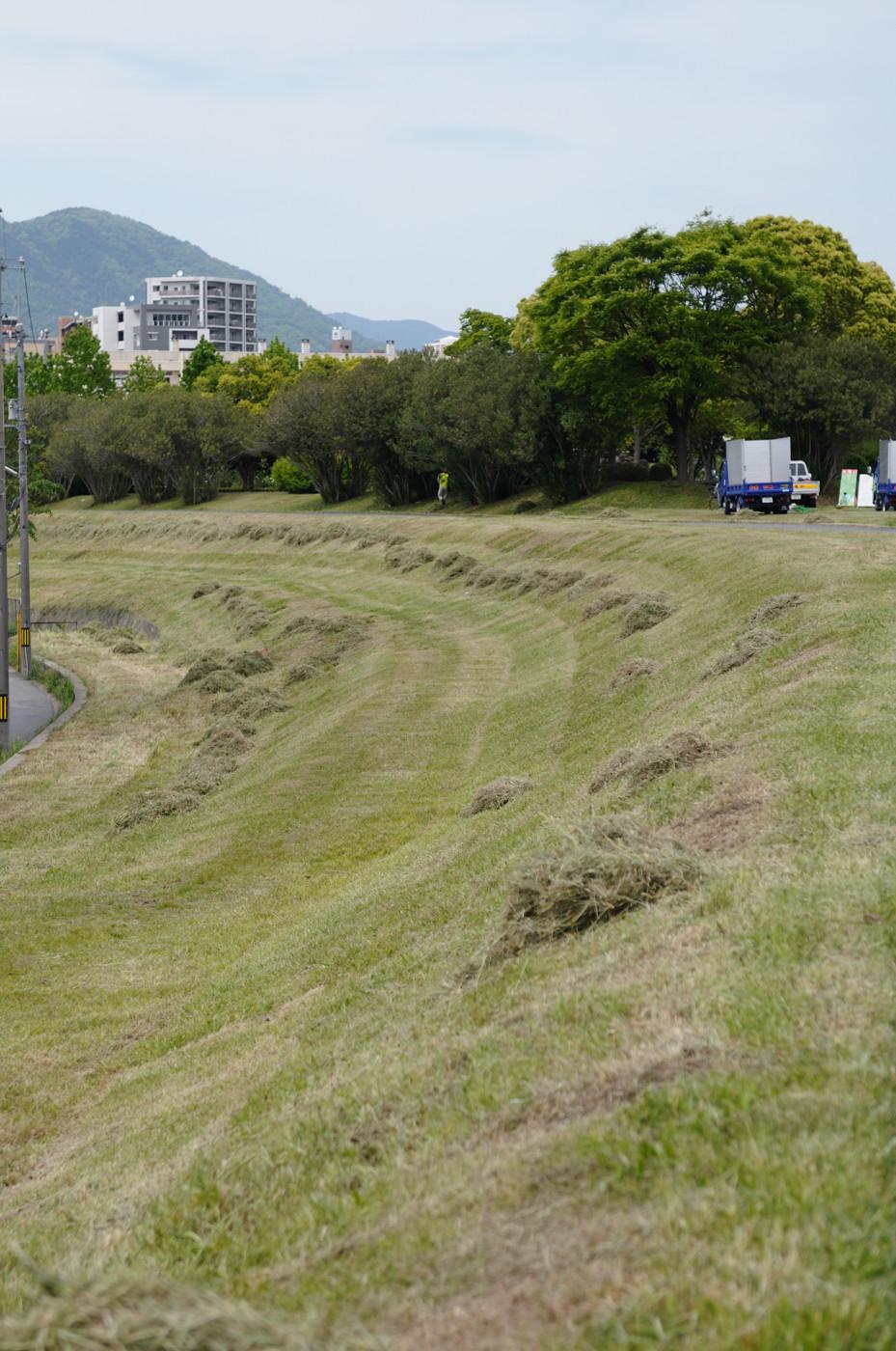 刈られた草が並べられて
