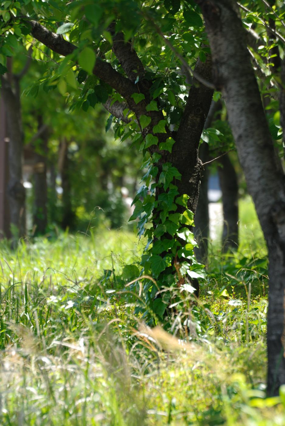 立ち並ぶ木