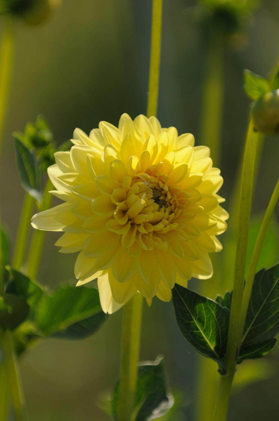 畑の近くのお花その1