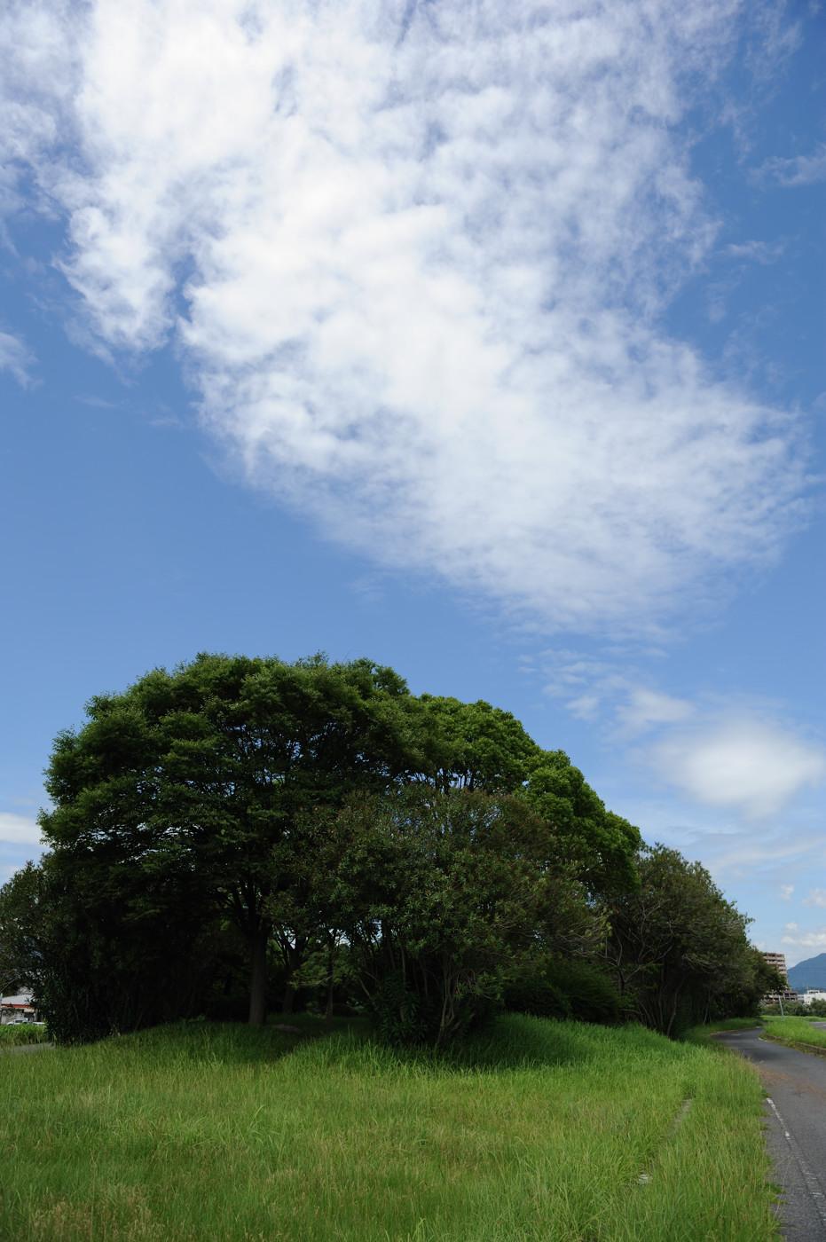 キレイな雲です