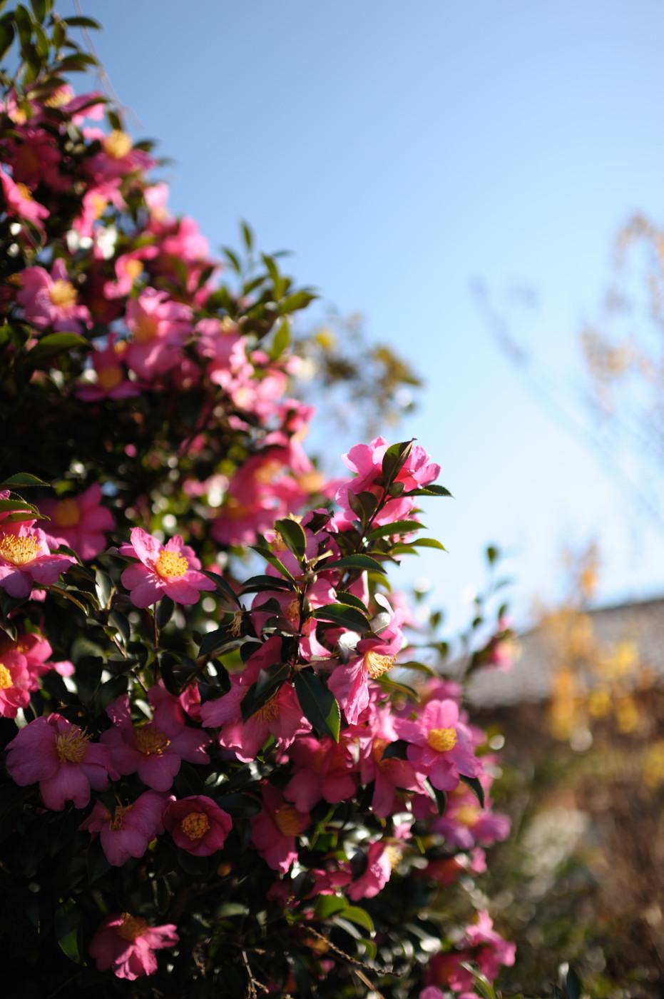 秋のお花でゲソ