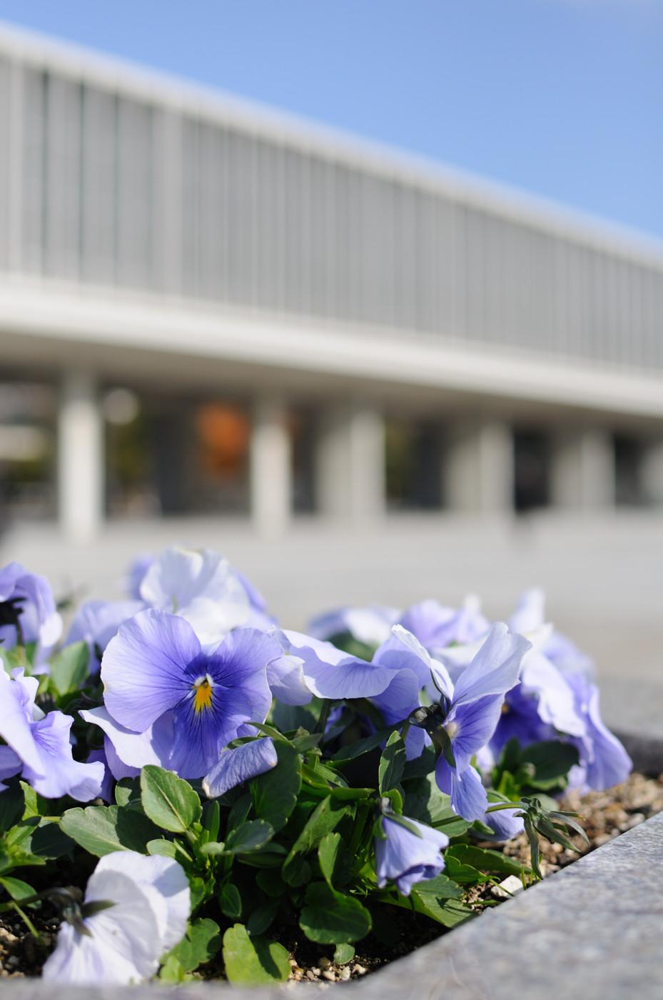 花と広島平和記念資料館でゲソ