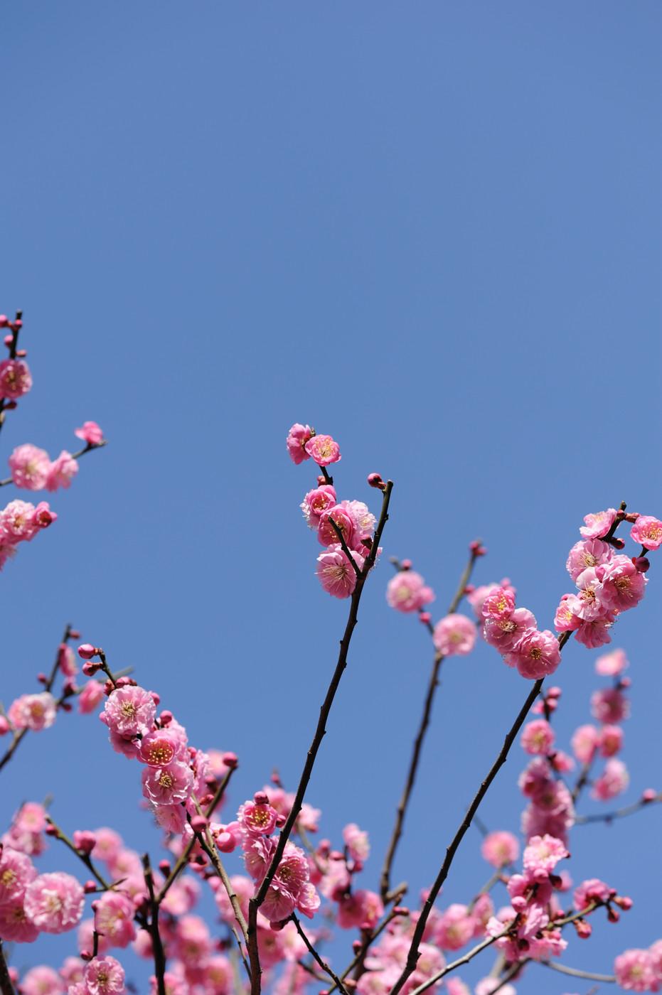 ピンクと空でゲソ