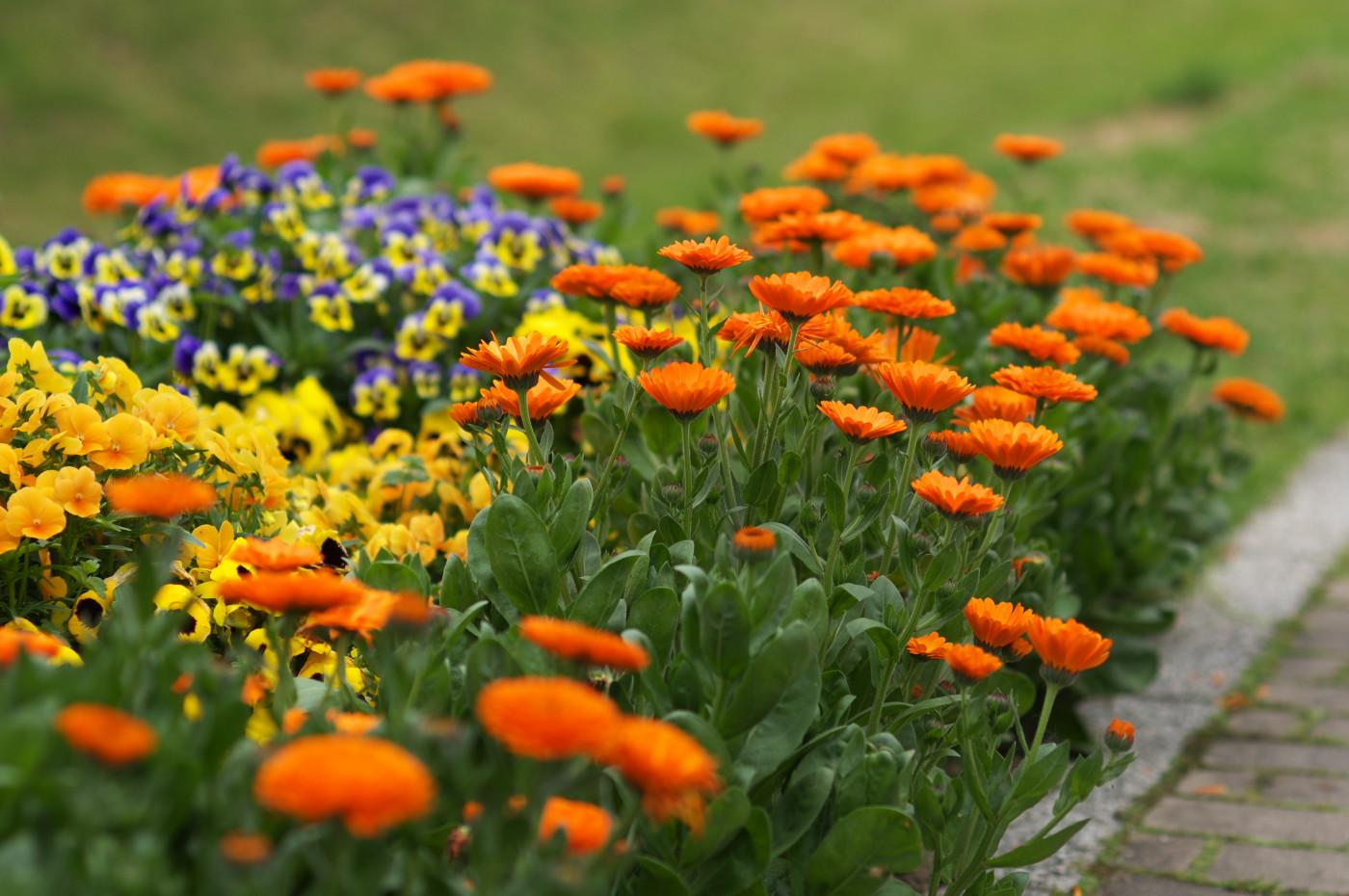 公園のお花でゲソ