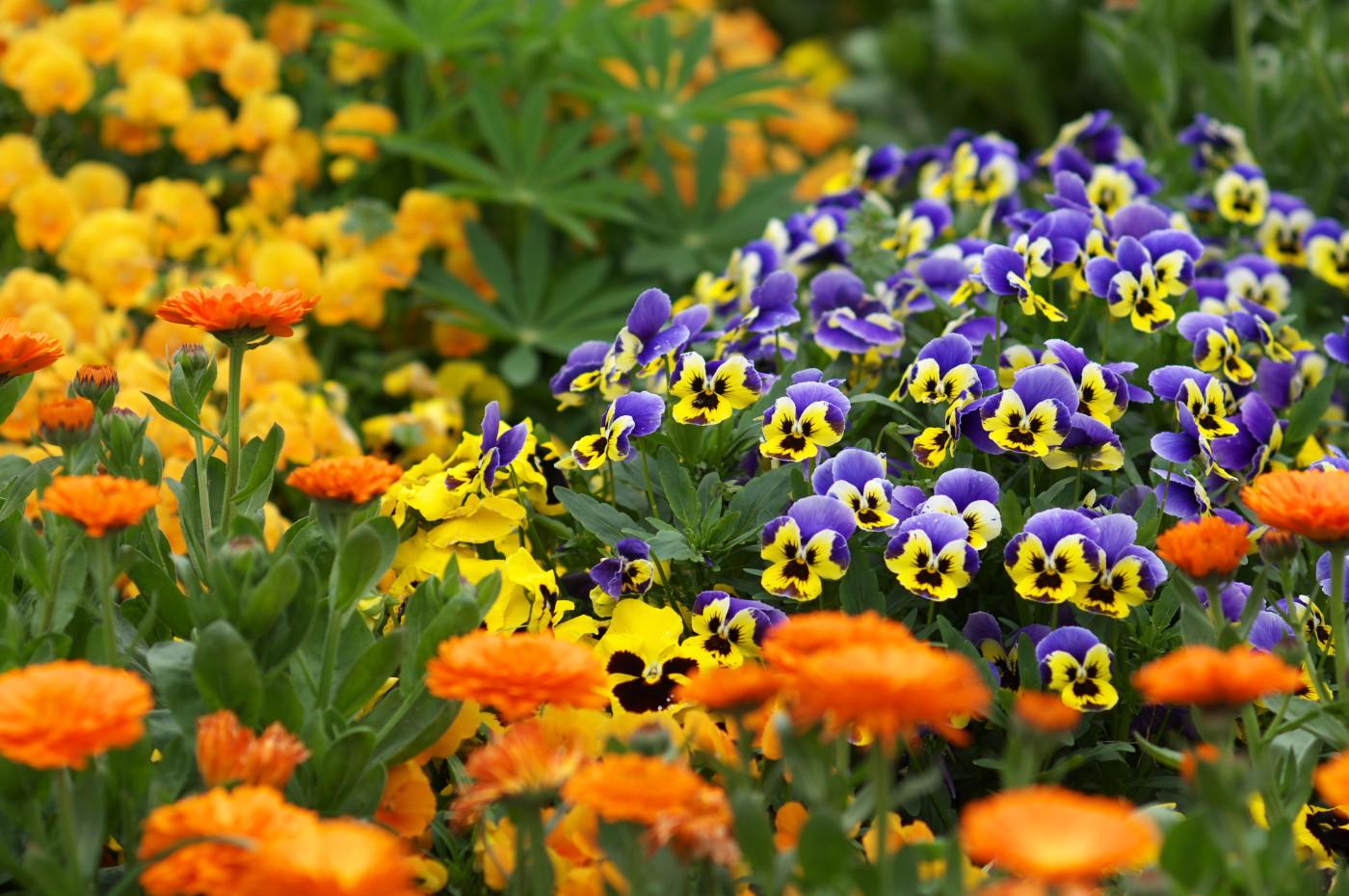 これも公園のお花でゲソ