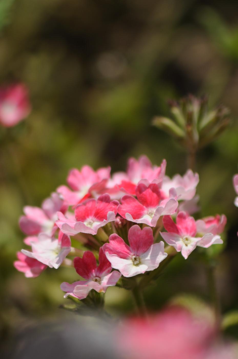これも道端の花でゲソ
