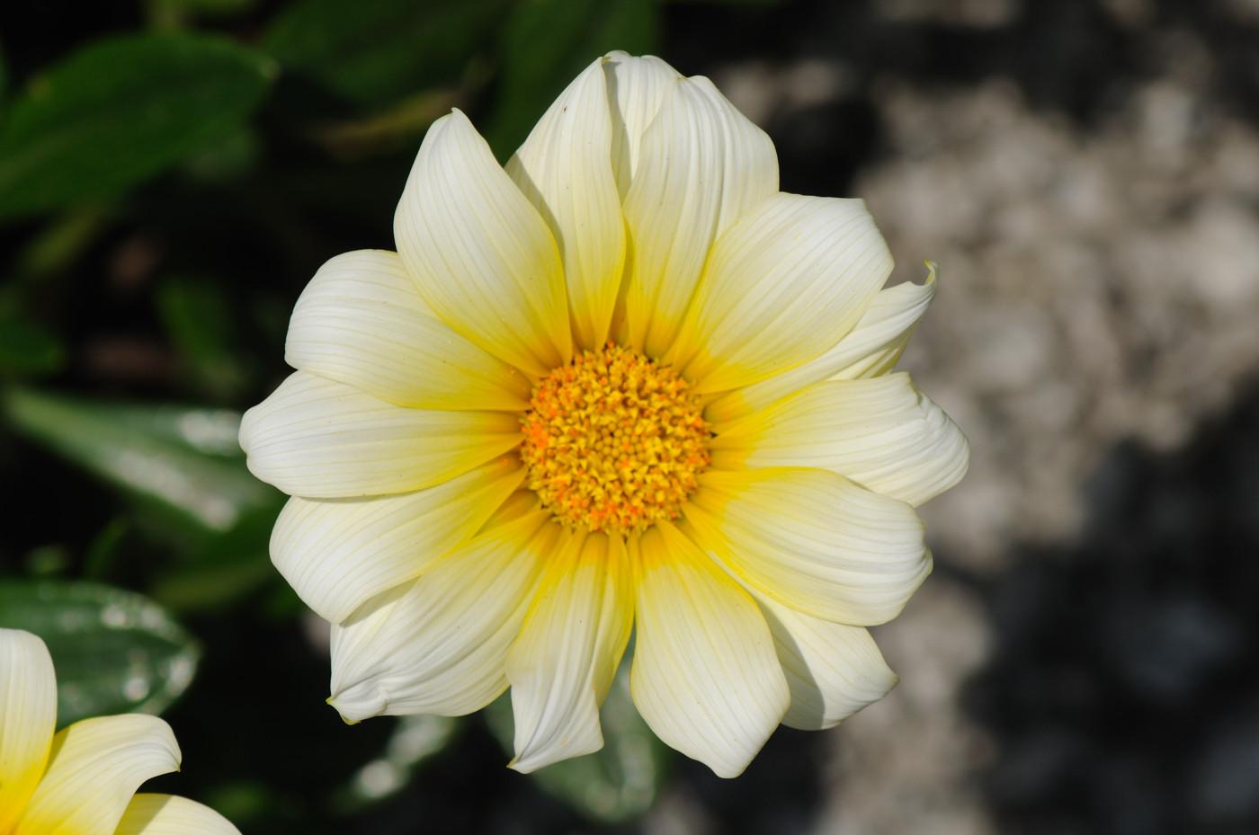 白と黄色でゲソ