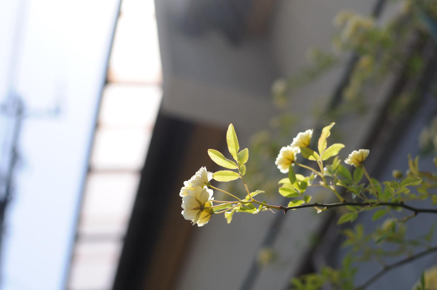 家に咲いている花でゲソ