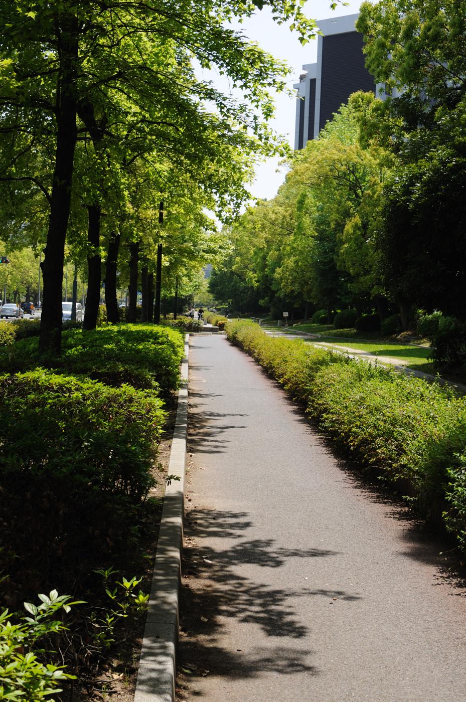 新緑と道その2でゲソ