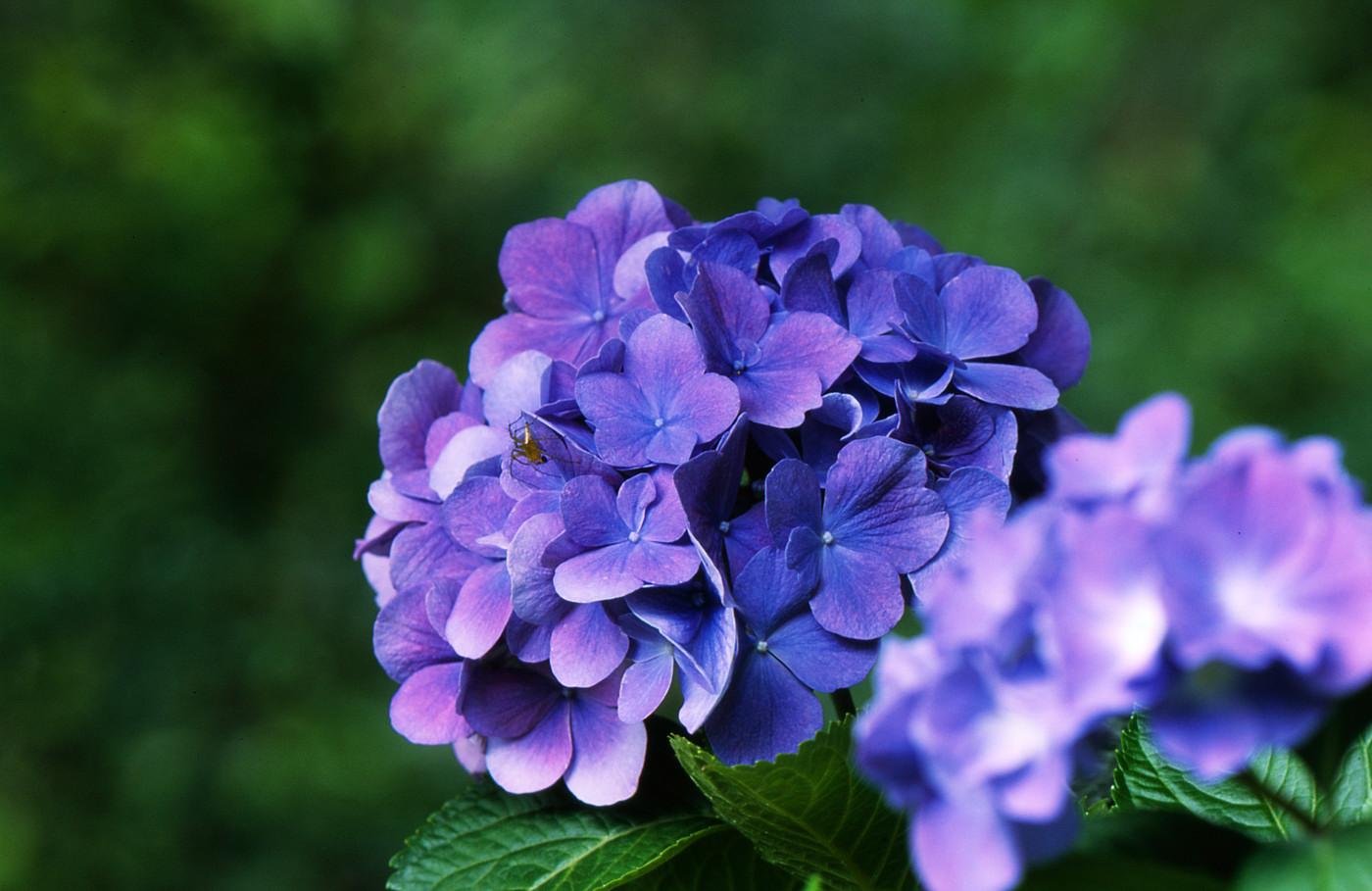青紫でゲソ