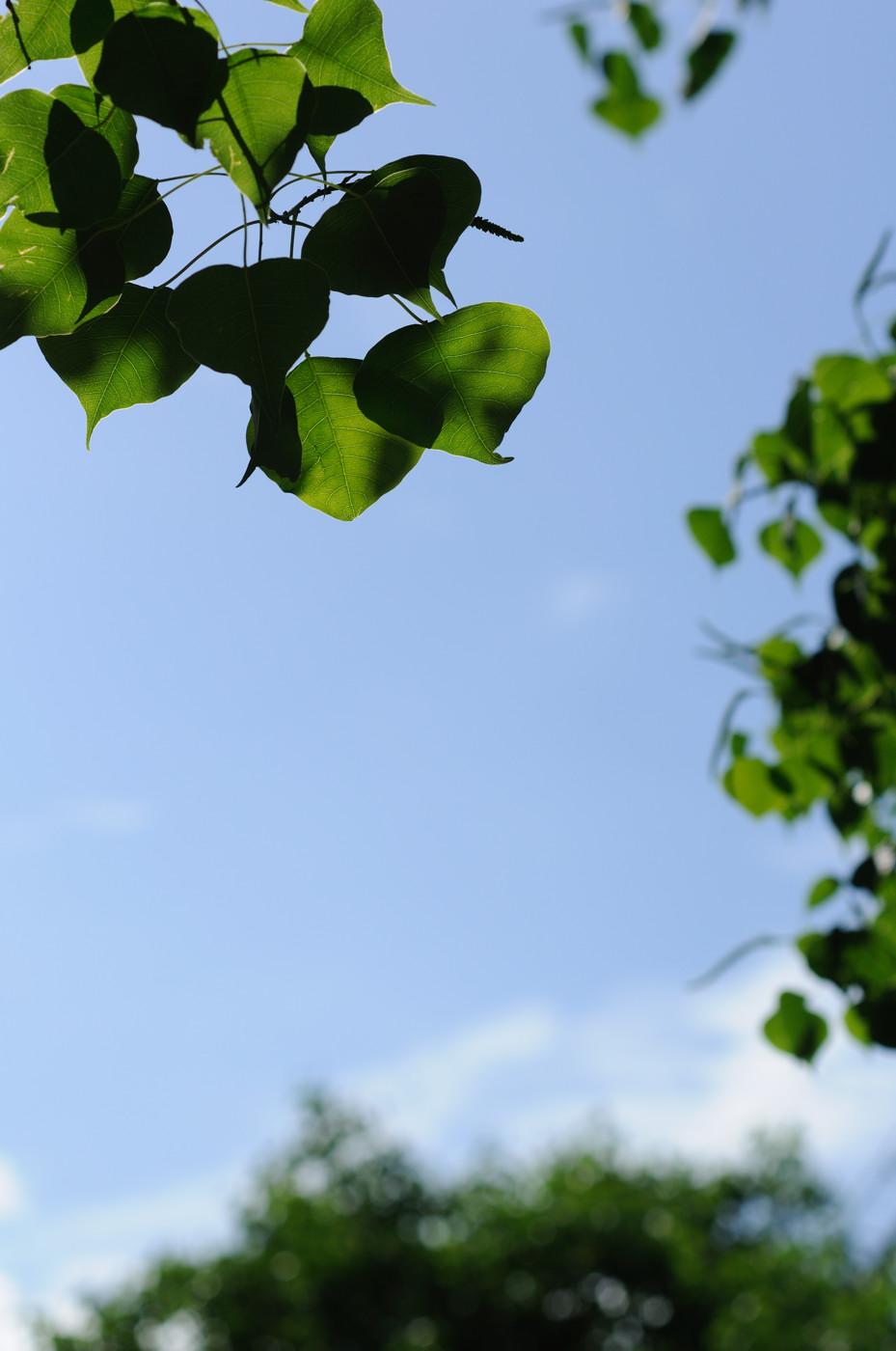 葉っぱでゲソ