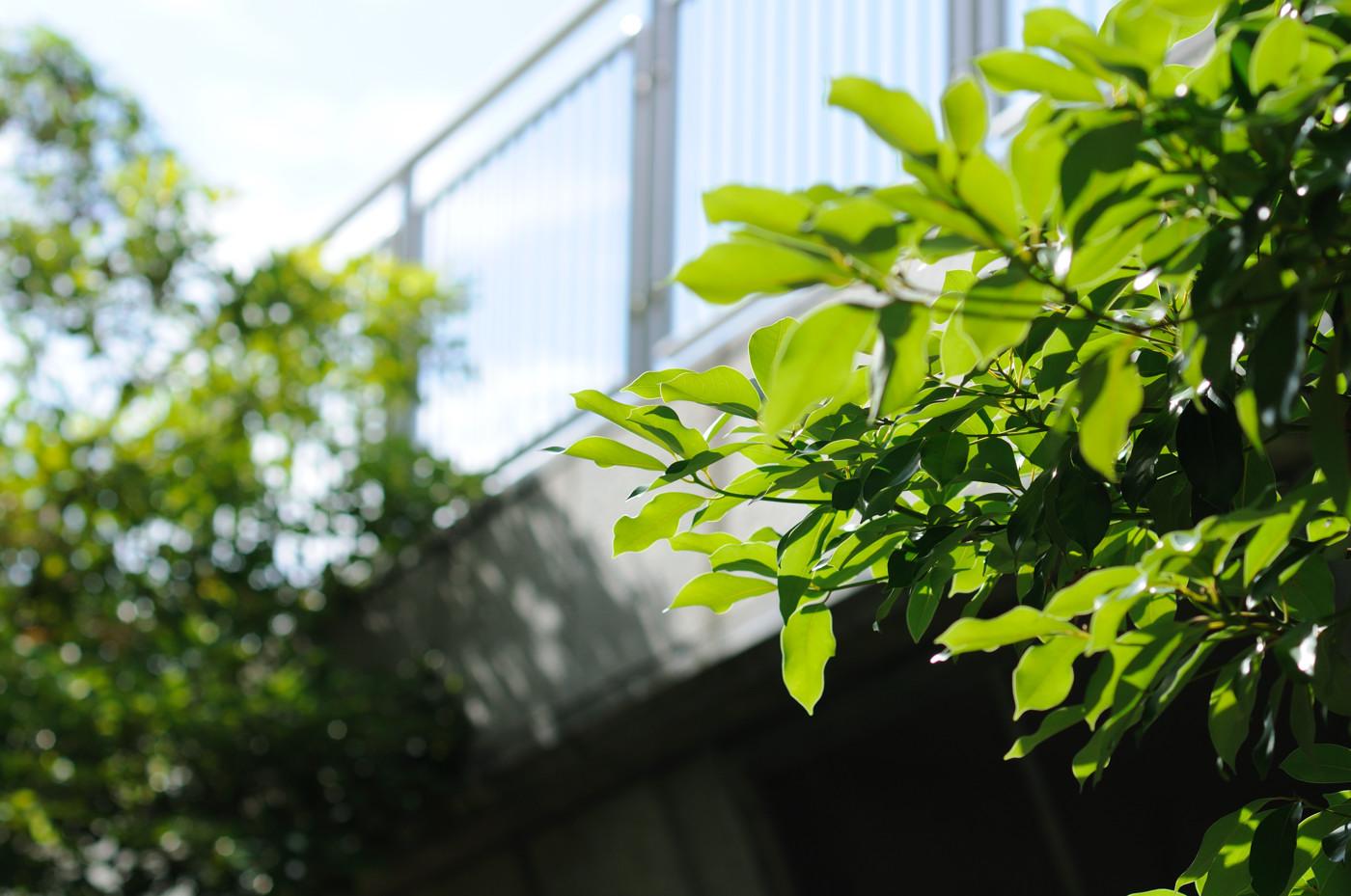 葉っぱとテニスコートの壁でゲソ