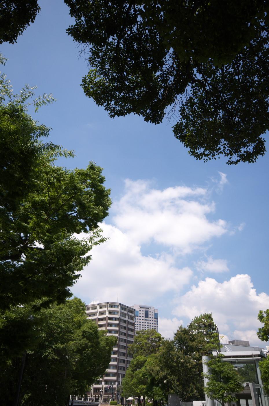 夏の空でゲソ