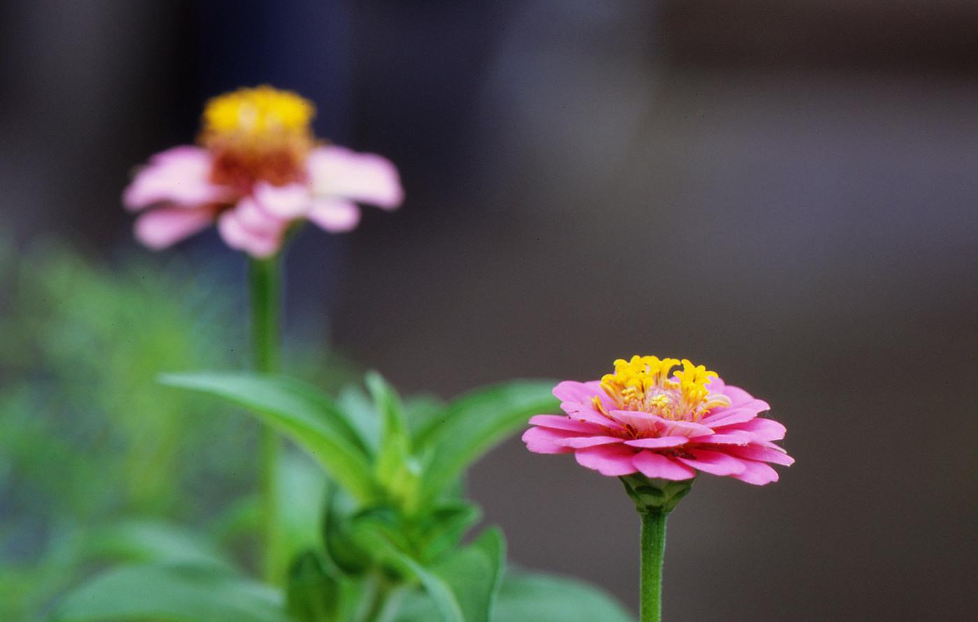 ピンクなお花でゲソ