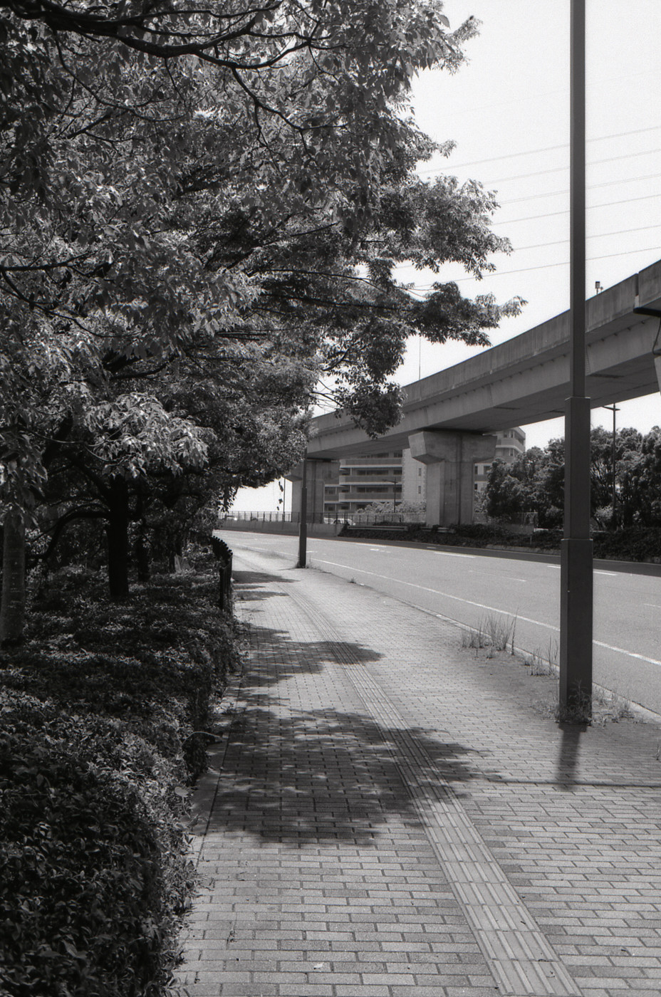 橋の方向でゲソ