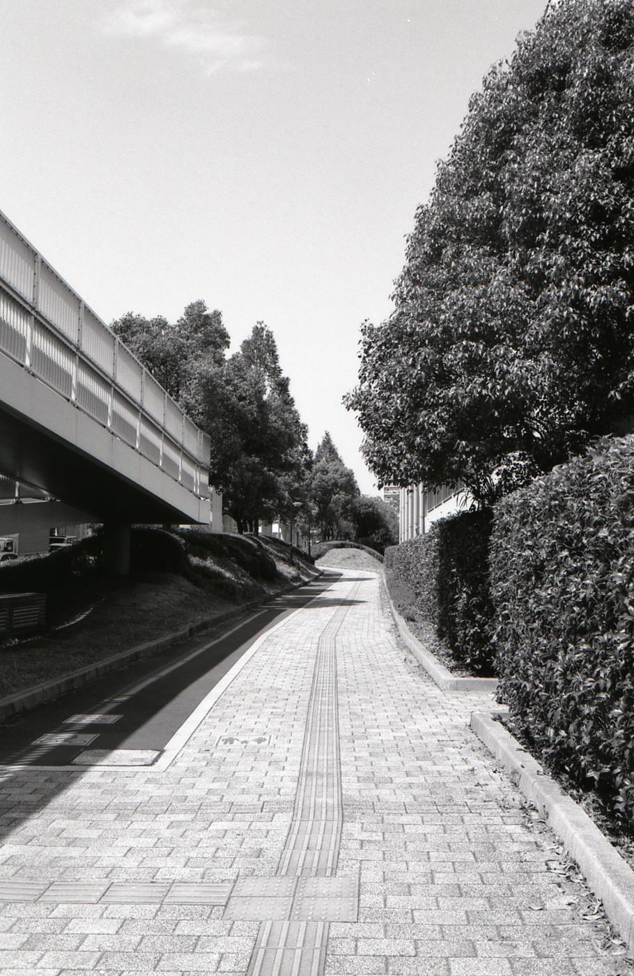 歩道でゲソ