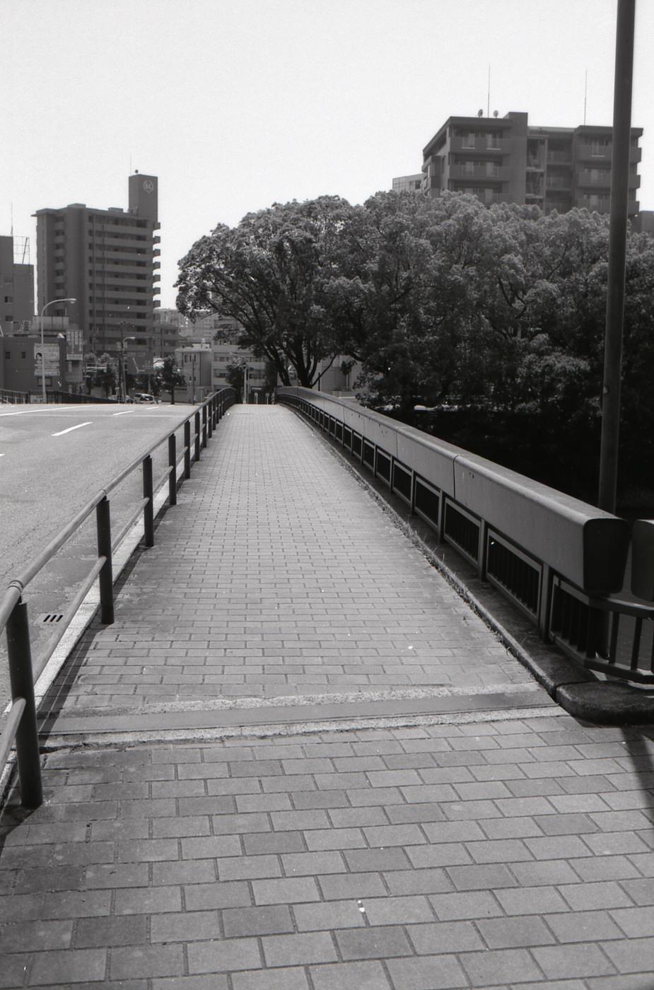 縦に橋でゲソ