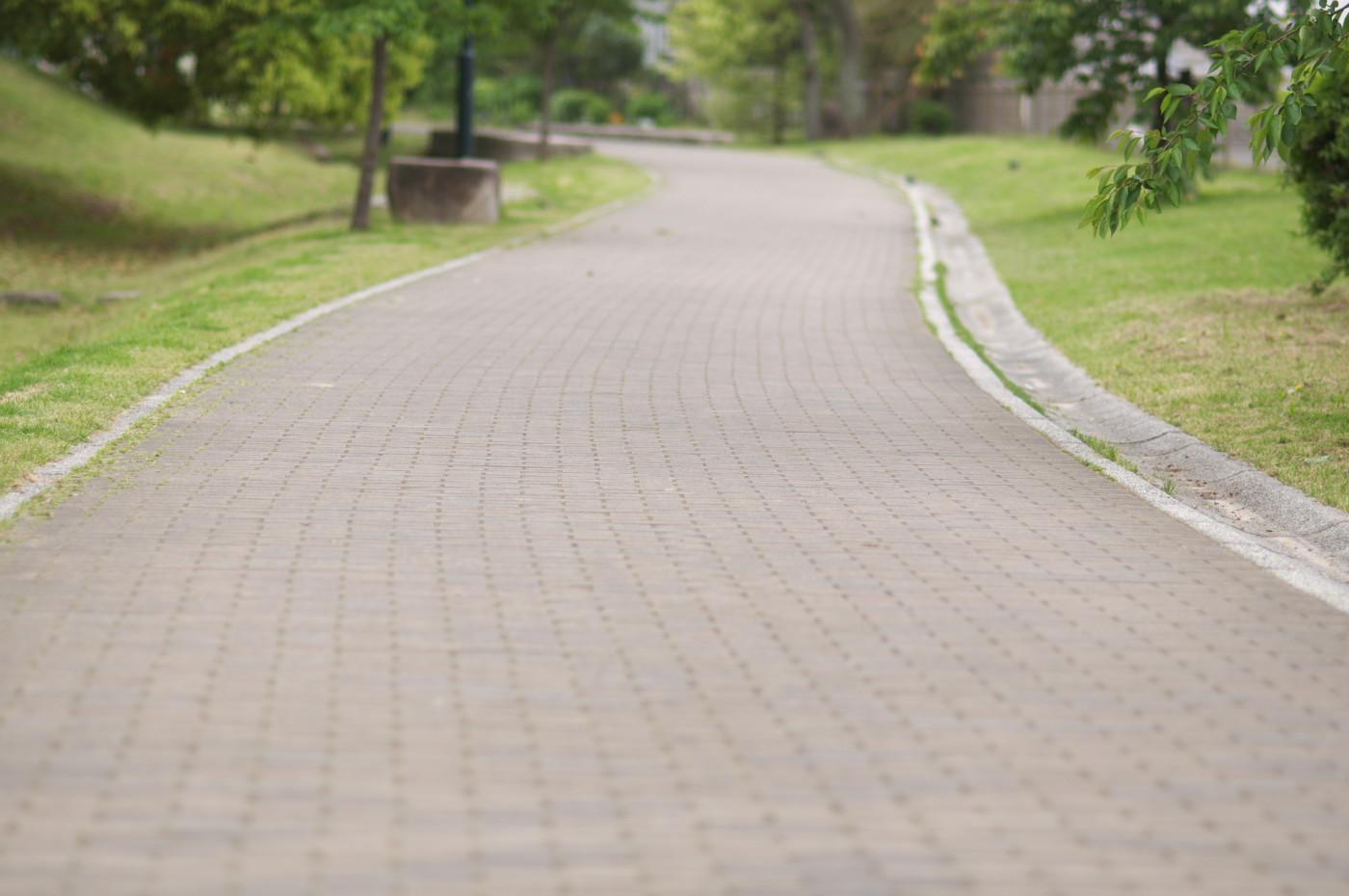 公園内の道でゲソ