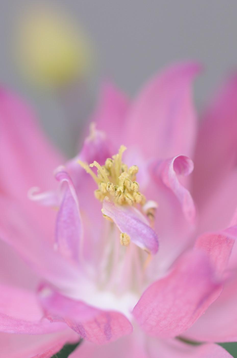 ピンク色なお花でゲソ