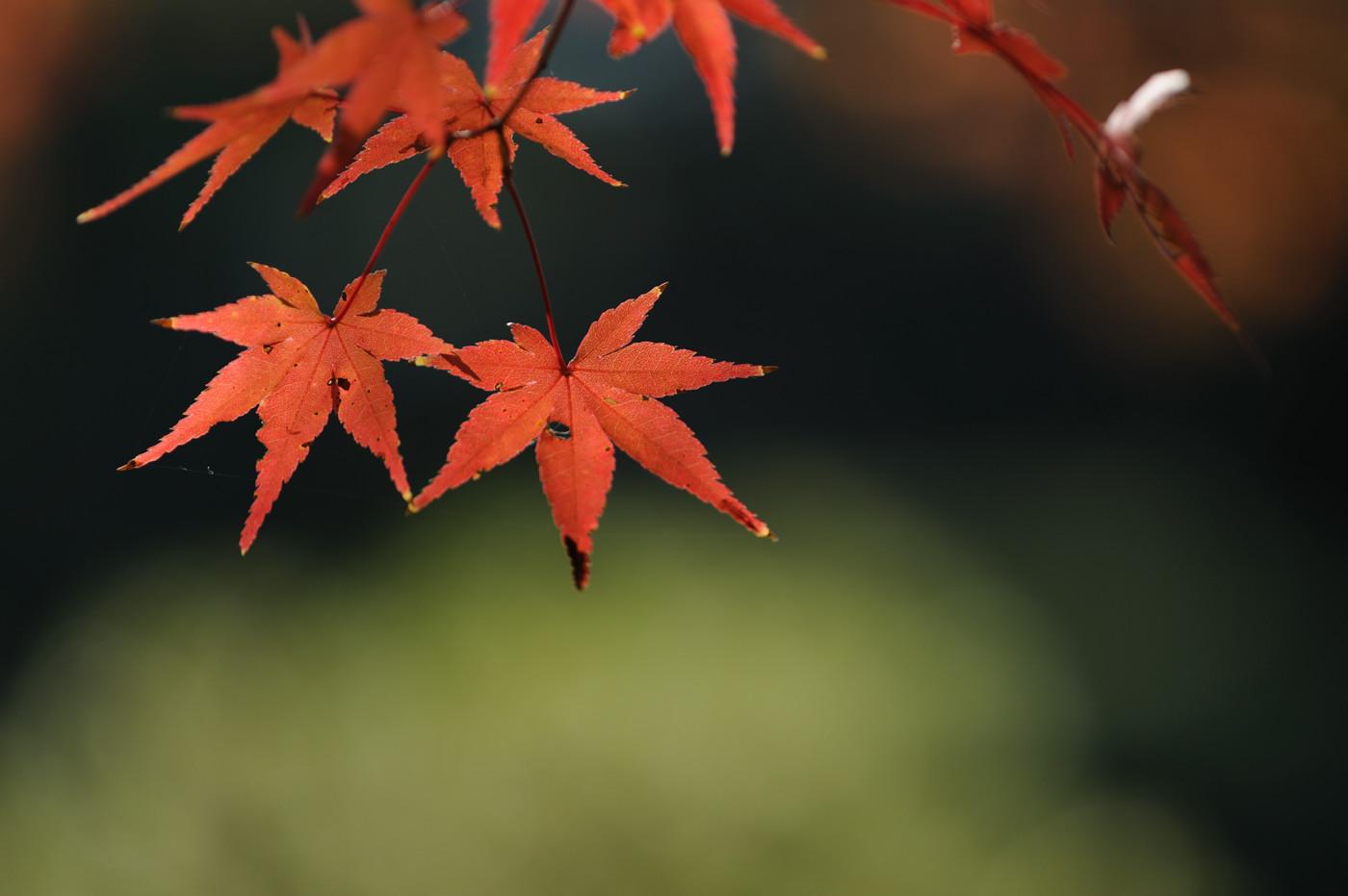 大きく紅葉その2でゲソ