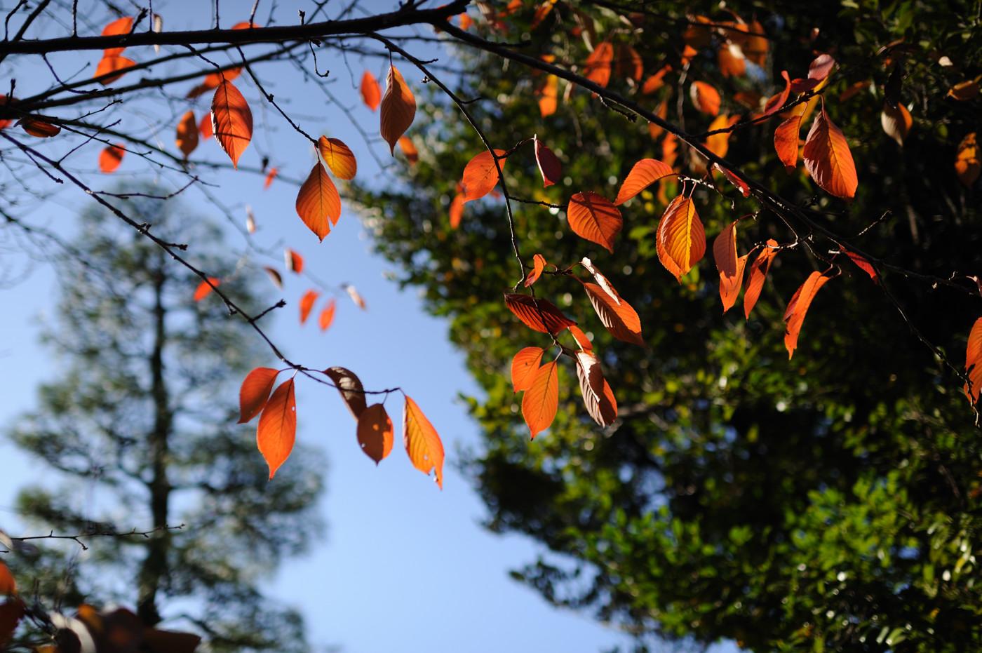 変色した葉っぱでゲソ