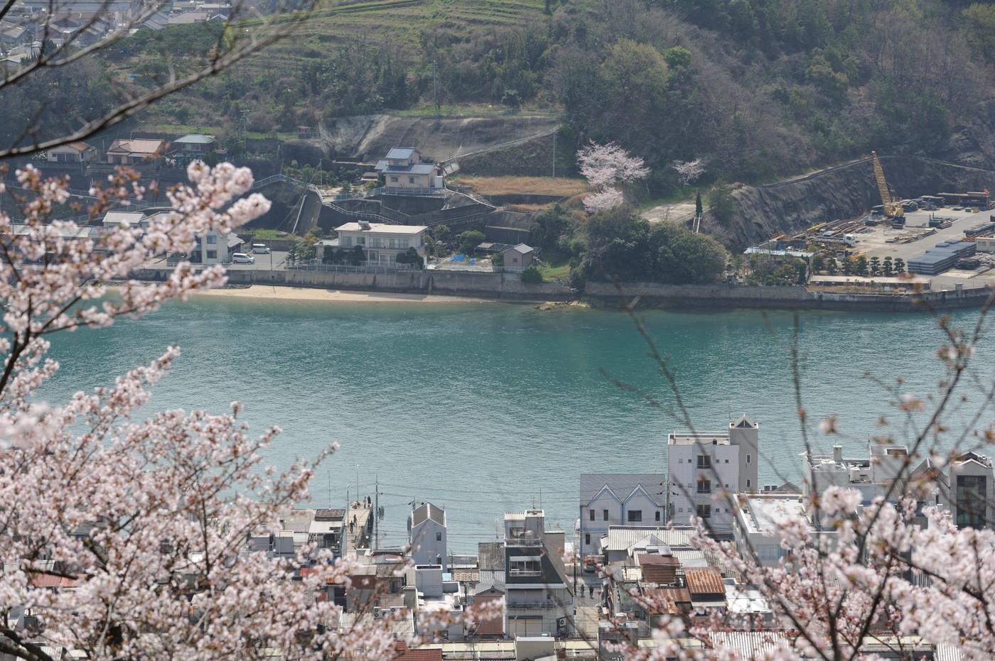桜と海でゲソ