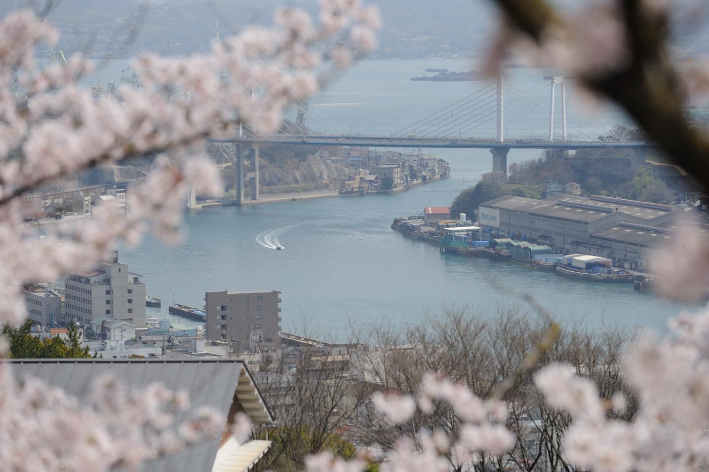 ボートと桜でゲソ