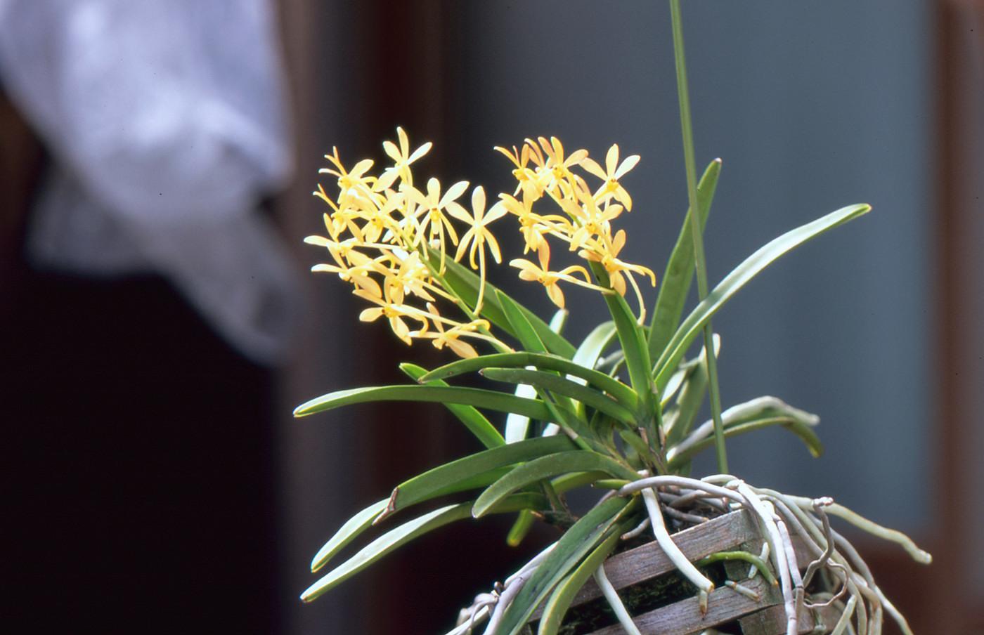 我が家はこんな花ばかりでゲソ