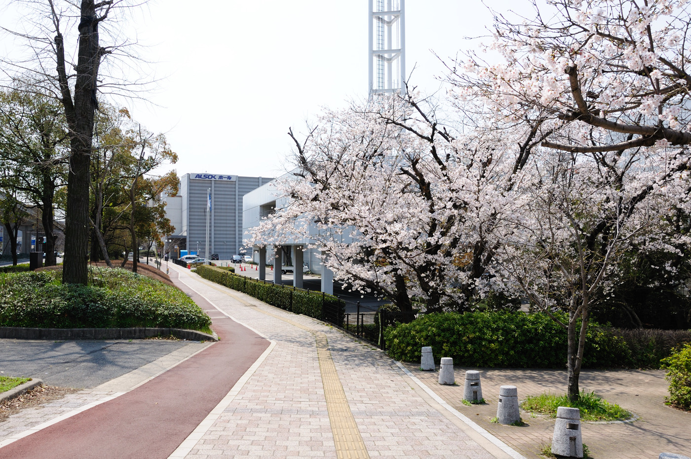 ホールと桜でゲソ