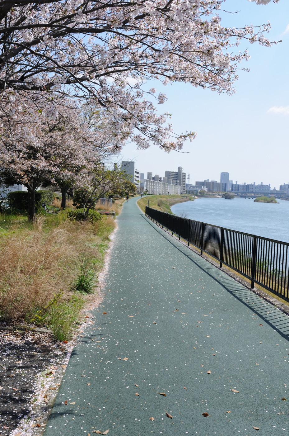 桜散るでゲソ