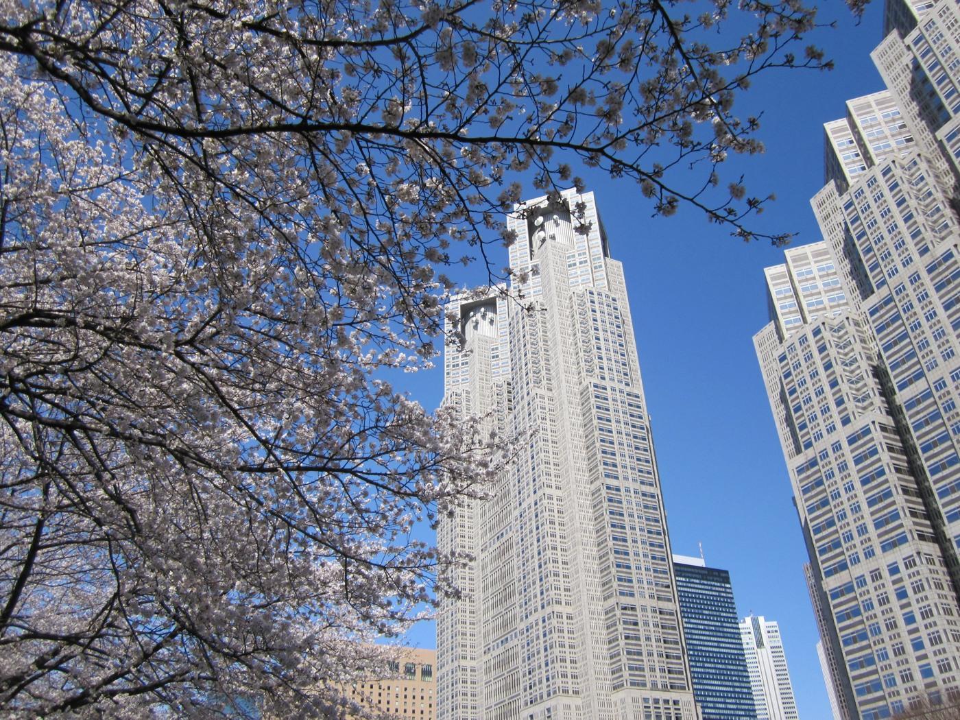 桜と都庁でゲソ